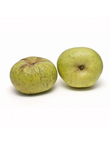 Manzano de Raíz Reineta Blanca