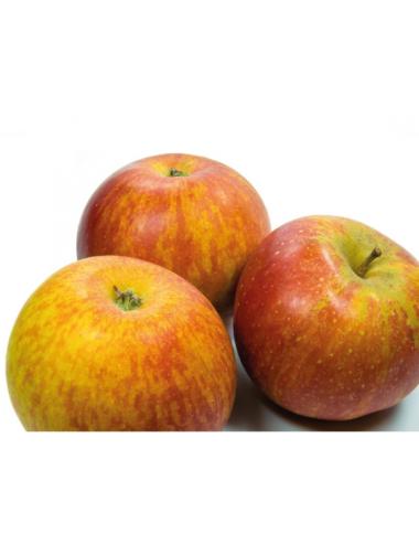 Manzano Naranja de Cox