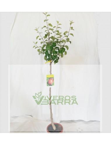 Manzano Carapanon