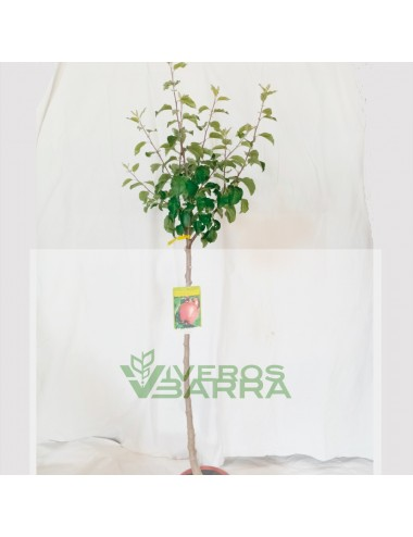 Manzano Verdedoncella